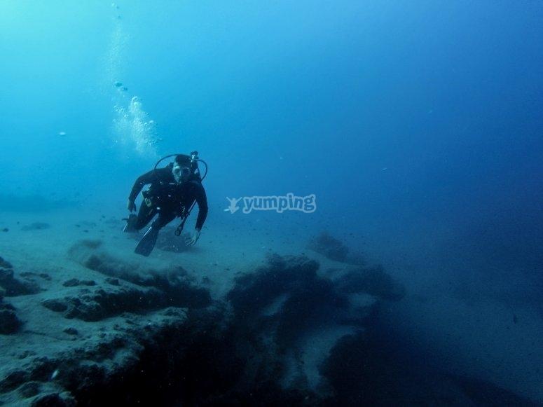 石斑鱼游泳