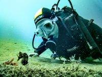 以及海底的海洋生物