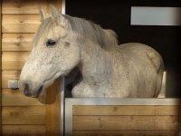 un caballo blanco en una cuadra