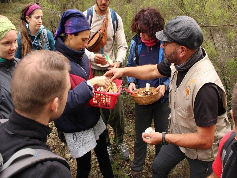 Interpretación de micología en Sierra de Aracena