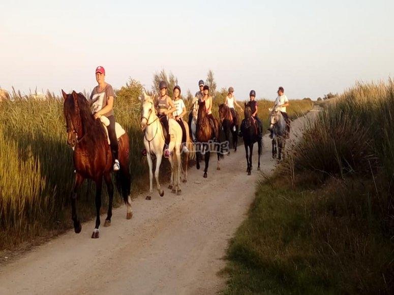 Paseo a caballo en Alcocéber