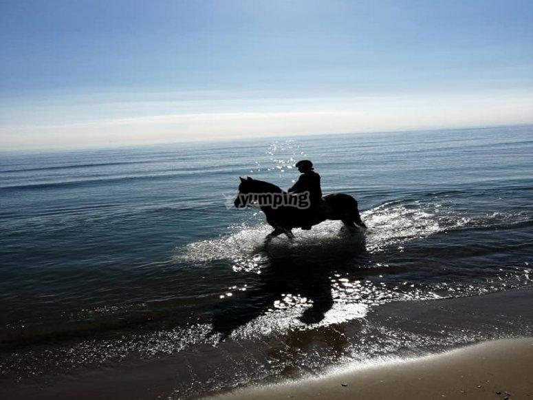 Ruta a caballo por la playa de Castellón