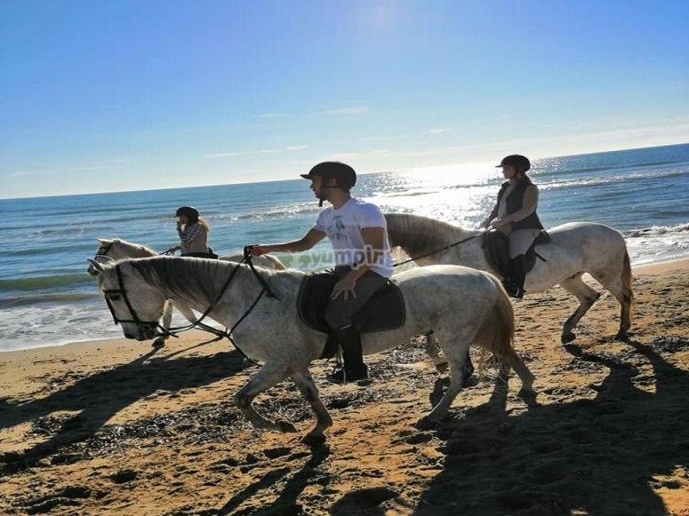 Recorrido guiado a caballo Alcocéber