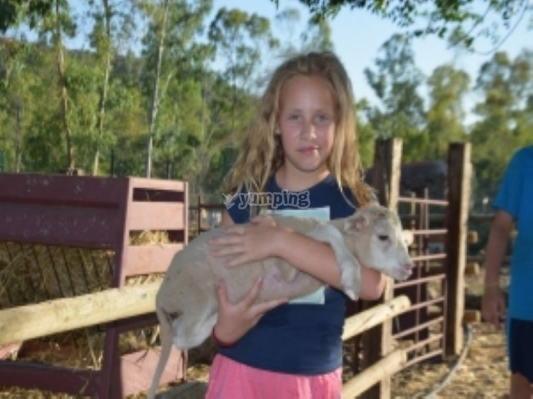 Learning to care for the animals of farm