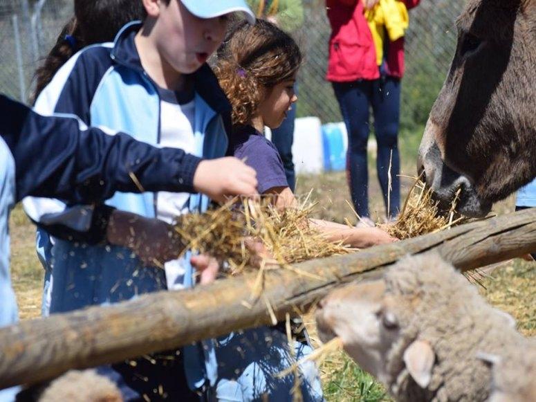 Alimentando a las ovejas del parque