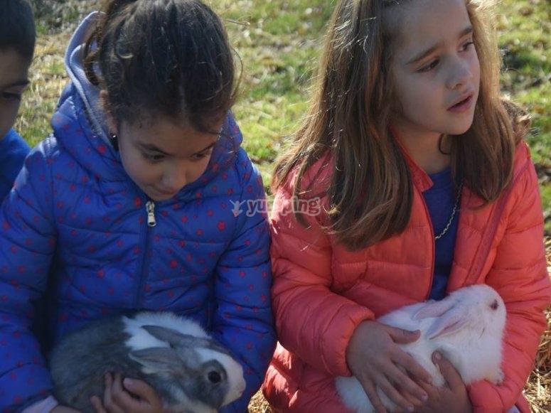 Descubriendo los animales