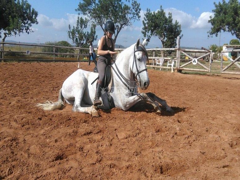 Castellón 的高级骑术课程