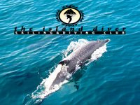 despedidasdelfines