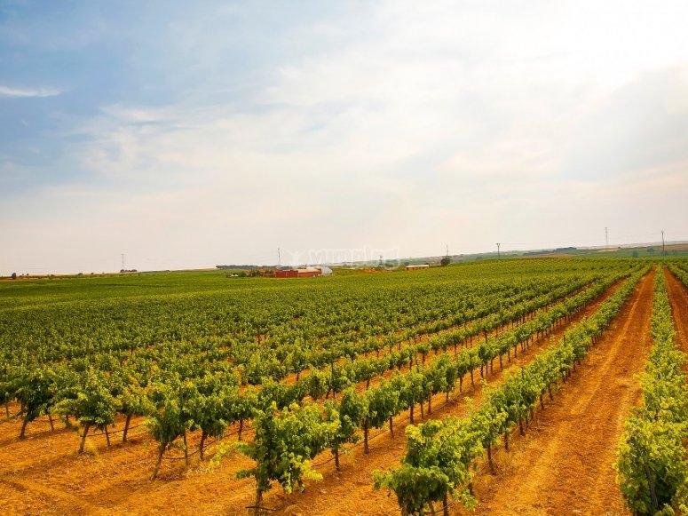 Villagarcía del Llano wine tourism