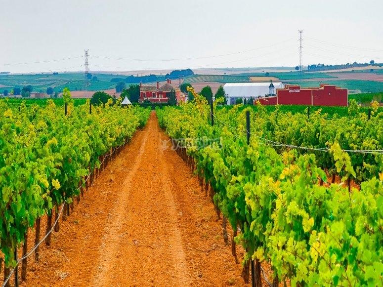 Villagarcía del Llano vineyards tour