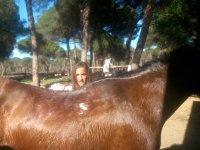 Spazzolare il cavallo