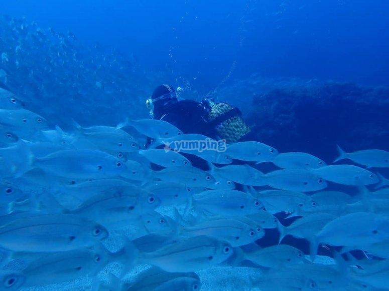Playa delInglés的潜水