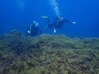 大加那利岛的潜水