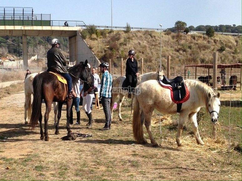 从蒙塞尼(Montseny)的一个农场骑马