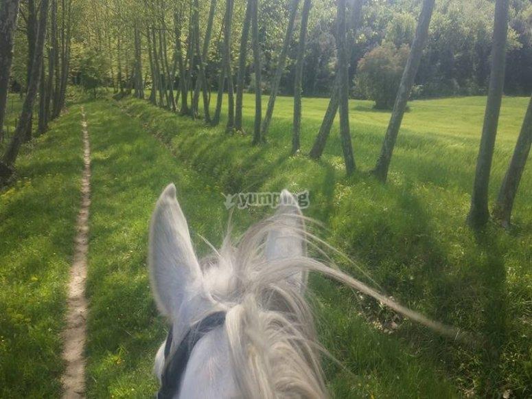 在蒙塞尼的卡斯特尔骑马