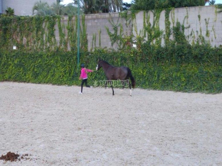 Portare il cavallo nella stalla