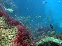 Banc de poissons sur les côtes de Grenade