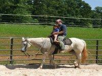 family horse