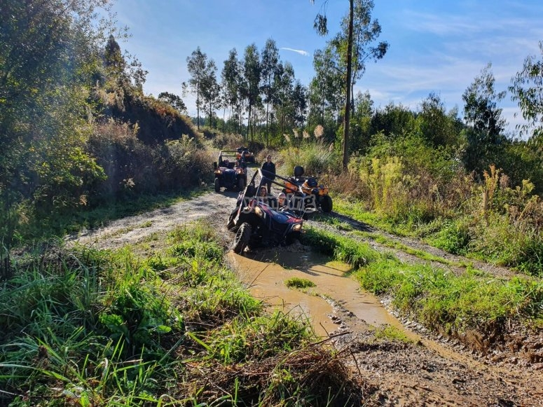 Terreno offroad en buggy