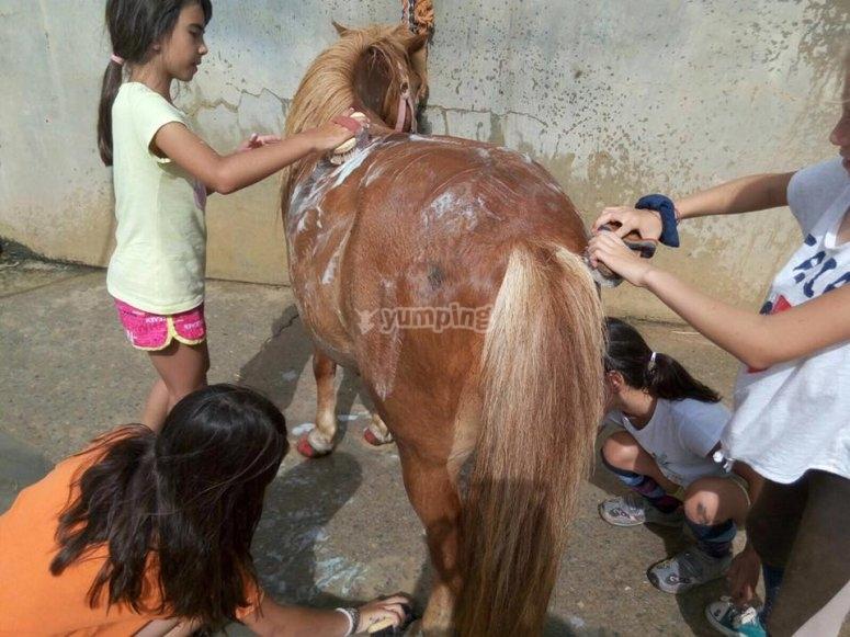 Aprendiendo los cuidados del poni