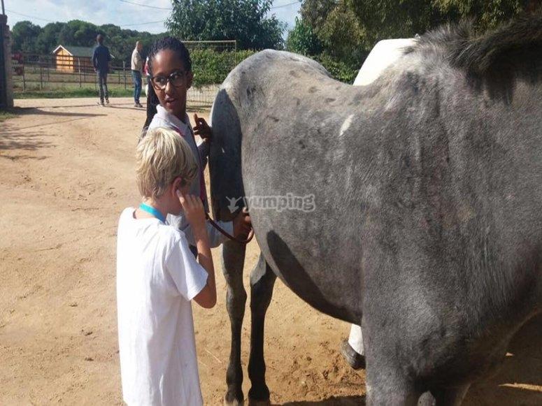 Actividades lúdicas con caballos