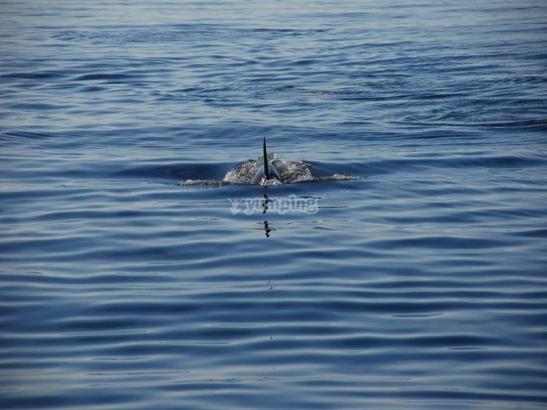 在加的斯观看鲸类