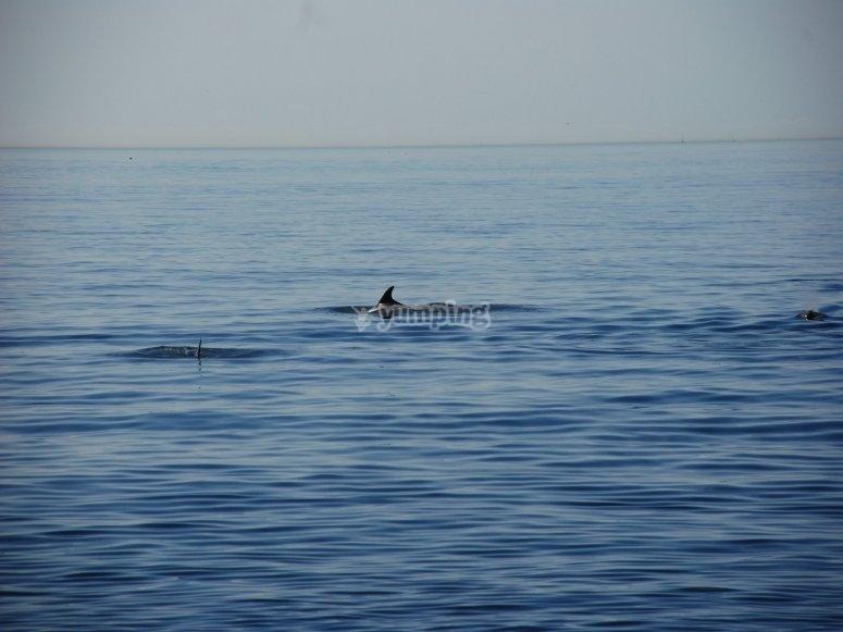 Avistar cetáceos en Cádiz