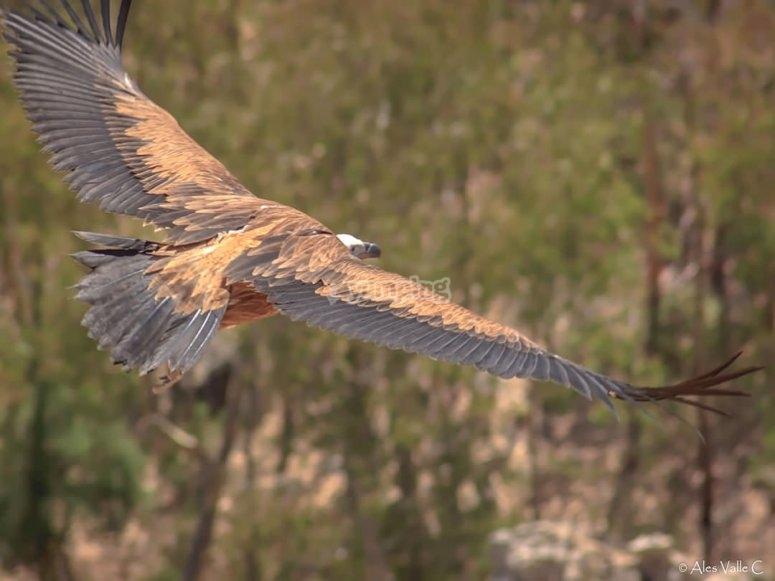 Observar el vuelo de las aves en Cádiz
