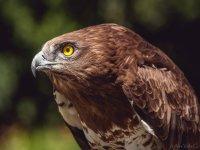 在加的斯-999进行鸟类学起飞-在加的斯观看鸟类飞行