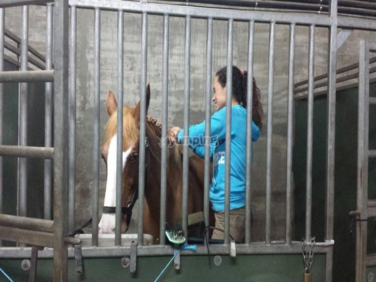 Caring for the horse