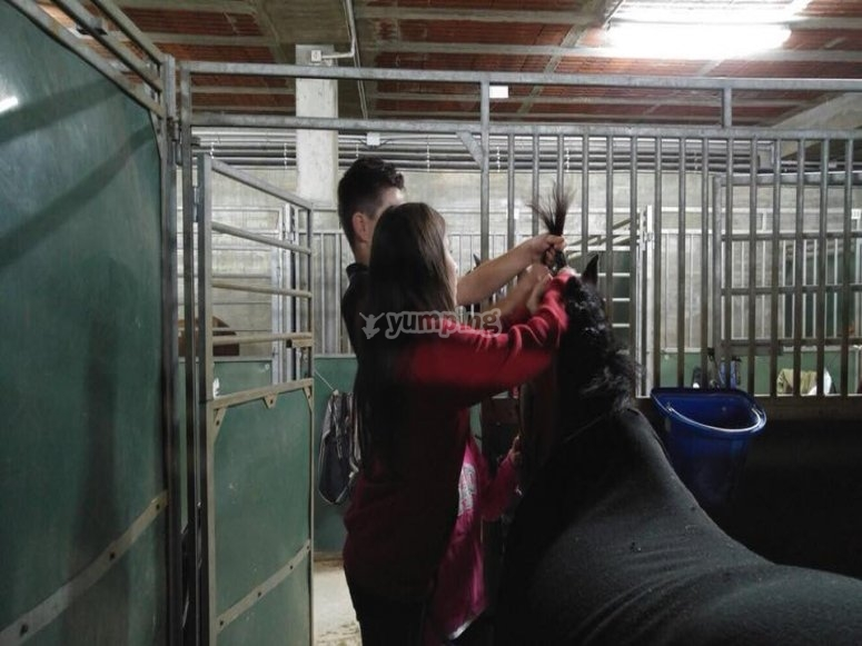 Combing the horse