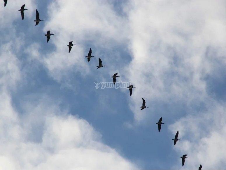 海峡上空的鸟类迁徙