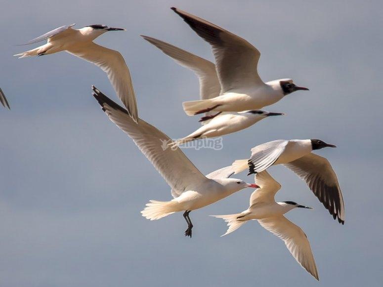 直布罗陀农村的海鸟