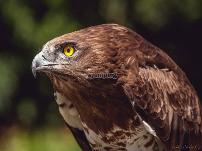 加的斯出发的鸟类学