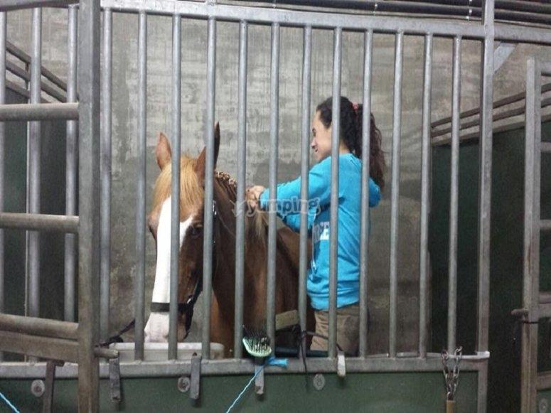 梳理我们的其中一个马匹