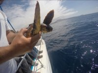 Sosteniendo la tortuga marina