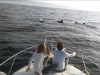 Viendo cetaceos desde el barco en Tenerife