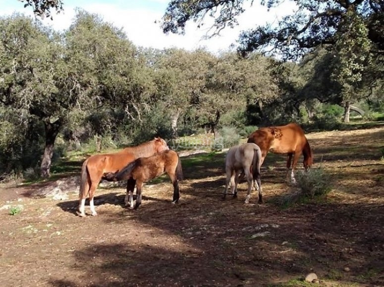 我们的马在田野里休息