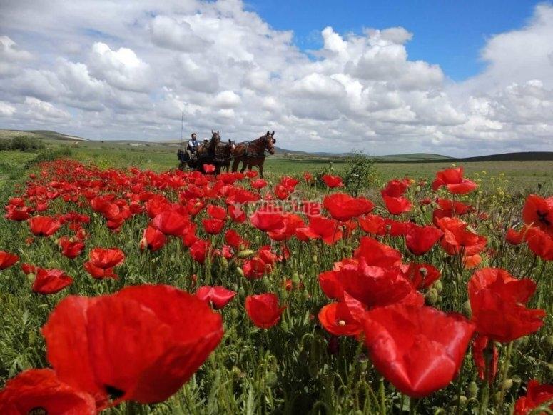 Crossing the flower fields