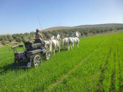 Paseo coche de caballos y degustación Córdoba 2h