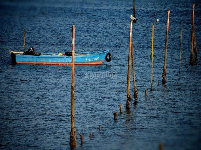 Cortegada水域的图像