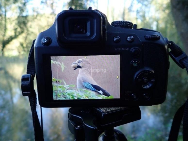 带有Garrotxa的鸟类图像的照相相机