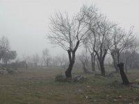 Arboles entre la niebla
