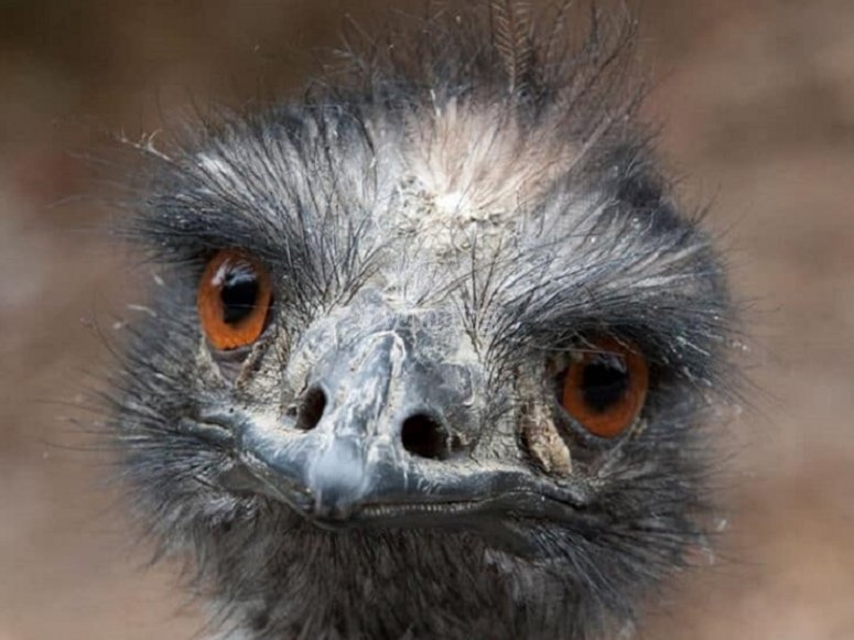 One of our emus