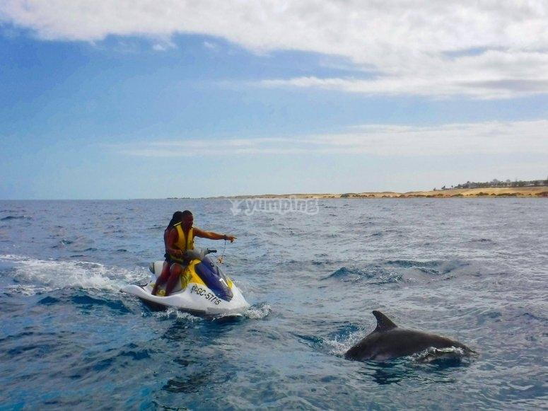 Delfín junto a la moto de agua
