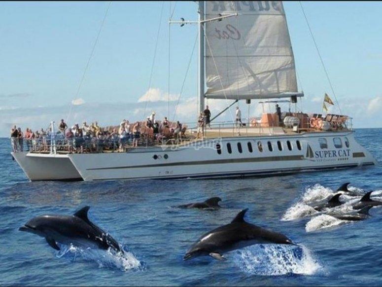 Contemplando delfines nadar junto a nosotros