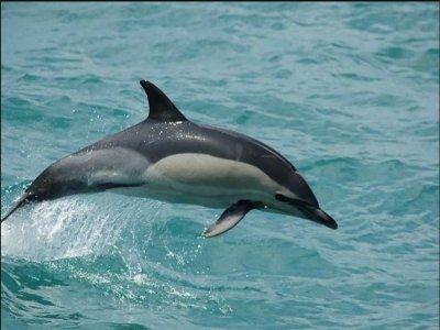Paseo en barco para ver cetáceos y aperitivo Mogán