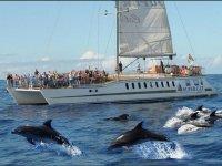 Avistando cetáceos con aperitivo para niños Mogán