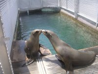 Meet our sea lions