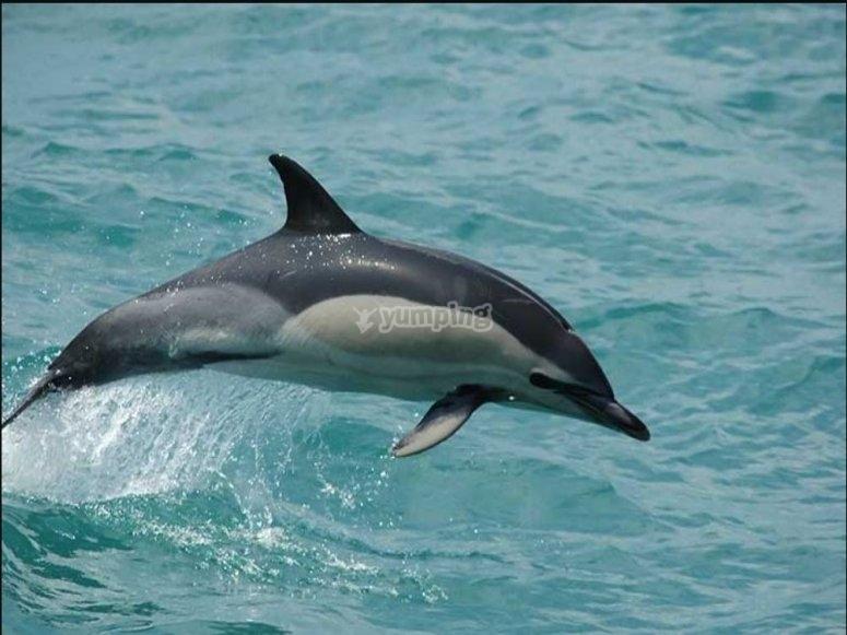 海豚在海中跳跃